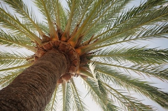 Palm tree structure