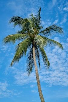 Palm tree with sky background