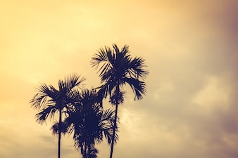Palm trees at sunset with clouds background
