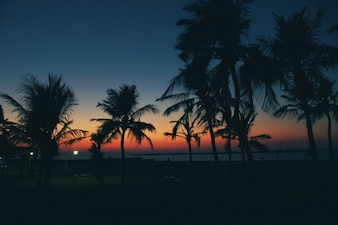 Palms silhouettes and a colorful sunset