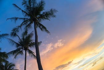 Palms trees with clouds background