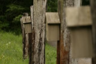 photo of a birdhouses with perspective