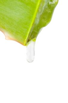 Piece of leaf aloe vera dripping
