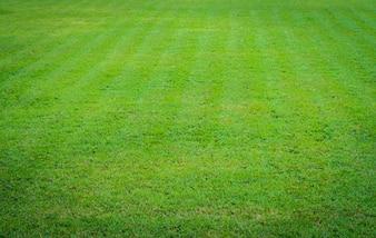 芝のワンピース