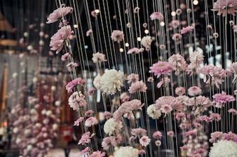 ピンクと白の菊が天井から糸でぶら下がっている
