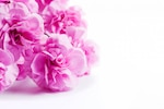 Pink flowers on a white table