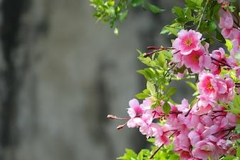 デフォーカス背景にピンクの花