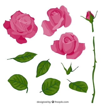Pink rose in parts