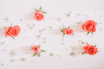 Pink roses and tiny white flowers on white background