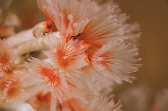 Pink seeweed