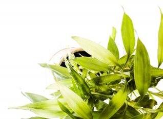 plant   gray