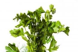 plant   herb