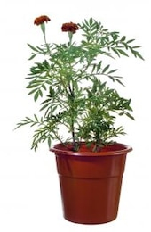 plant, shaft