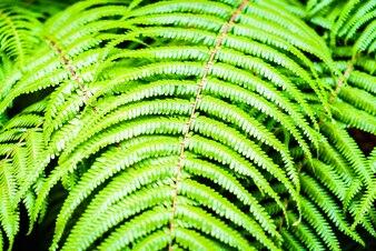 Plant closeup tropical natural grass