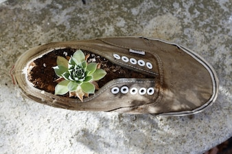 Plant growing on a sneaker