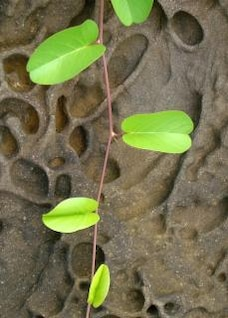 plant on strange rock formation backgrou