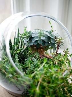 Plants on the fishbowl