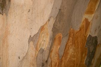 Platanus or plane tree bark texture, camouflage pattern