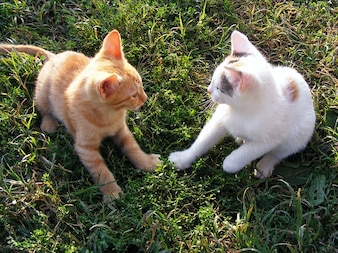 playing funny cats kittens animals