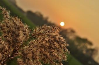 Plum at dusk