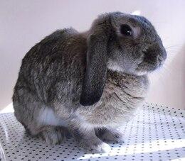 plush nature bunny bianca rabbit