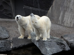 polar bears zoo bear pets wild animal