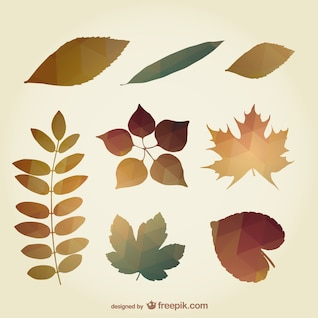 Polygonal autumn leaves
