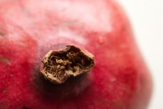 pomegranate  fruit  pink