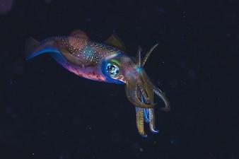 Portrait of Squid in Dark Ocean