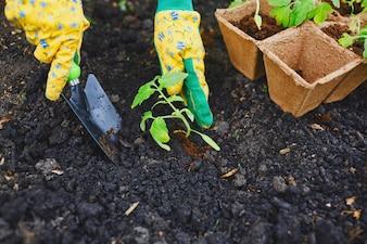 Pot farming peat tool cultivation