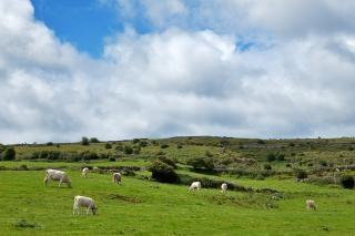 Poulnabrone牧草美しい