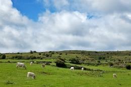 poulnabrone pasture landscape