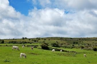 poulnabrone牧草地の風景