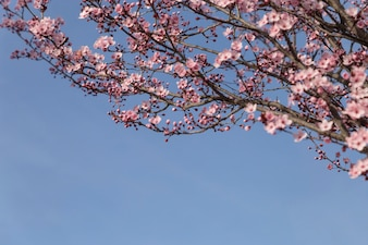Pretty branches with pink flowers