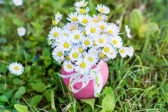 Pretty daisies in a pink vase