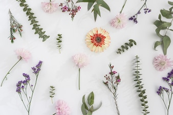 Pretty flowers on white surface