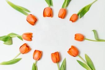Pretty frame made of orange tulips