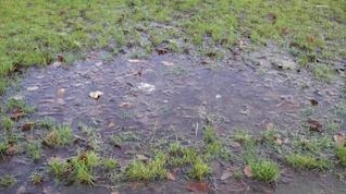 puddle  field