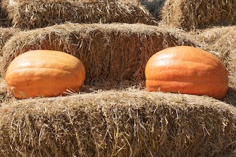 Pumpkins on the straw