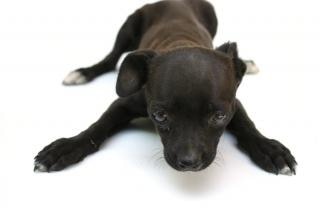 Puppy dog, light