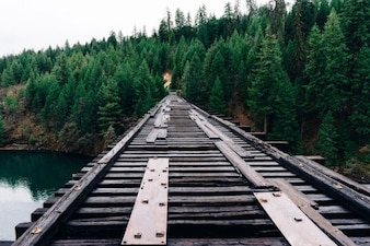 Railway to the woods
