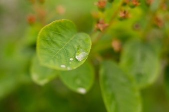 Raindrop on the leaf