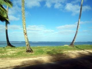 rarotonga beach trees