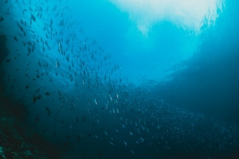 Rays of sunlight shining into sea, shcool of fish, underwater vi