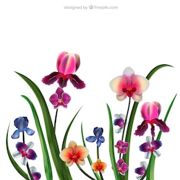 Realistic orchids