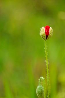 Red flower qith blur background