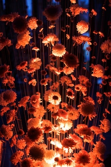 Red light illuminates chrysanthemums hanging on the threads