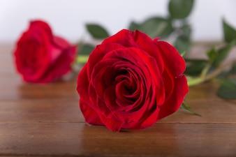 赤いバラが閉じる