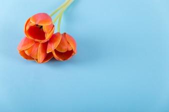 青い背景に赤いバラ