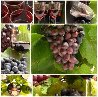 http://img.freepik.com/free-photo/red-wine--bottle_19-117583.jpg?size=338&ext=jpg